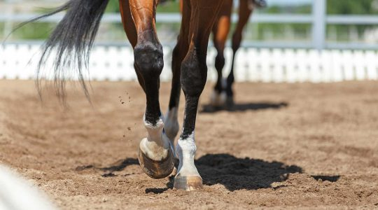 Silicon stimulates the production of glucosamine in horses