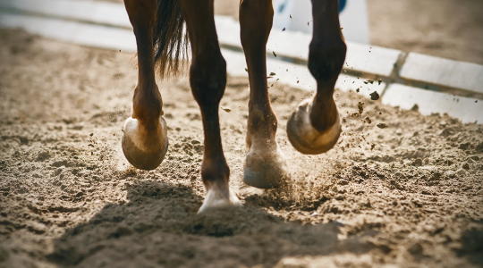 Difference between silicon and glucosamine for horses