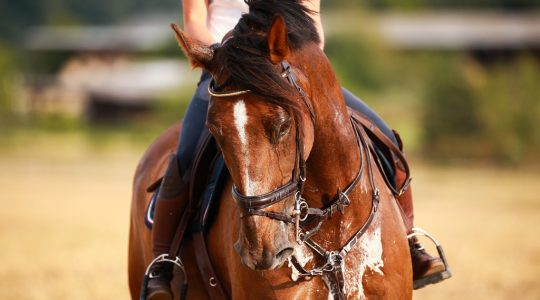 Is a lick sufficient to provide your horse with salt during hot days and heavier effort