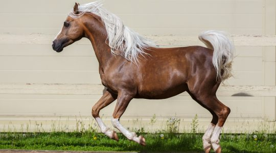 Vitamin E is important for horses.