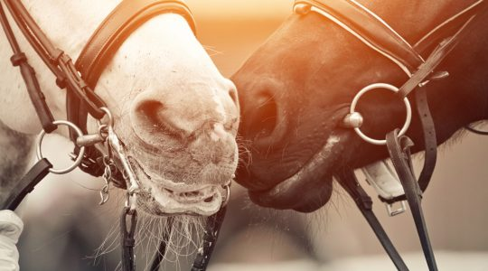grape extract works as an antioxidant in horses