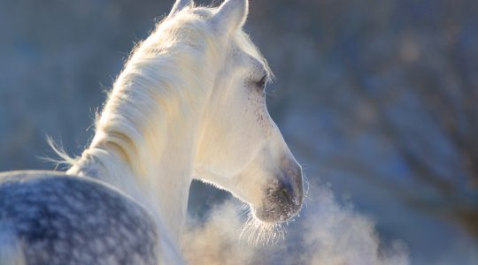 combination of plants against respiratory problems in horses