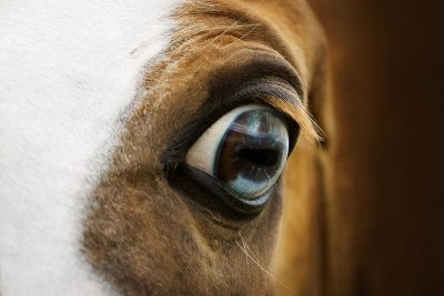 difference in magnesium and herbs in stress situations in horses