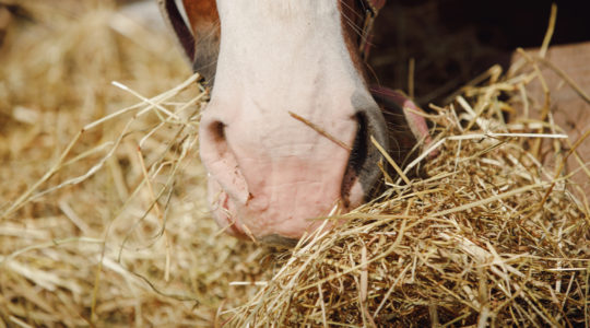 A shortage of vitamin E in the winter in horses
