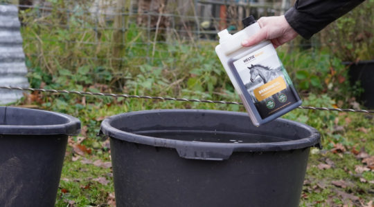 Adding Nettle to the water bucket of your horse