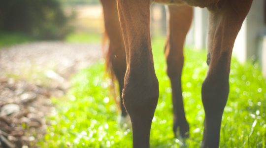 Mineral silicon for horses